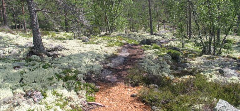 Path in Sammallahdenmäki