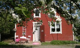Purkki Aitta -putiikin sisäänkäynti ja valkoiset kukat.