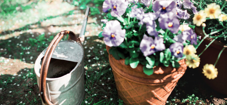 Watering can and lila flowers